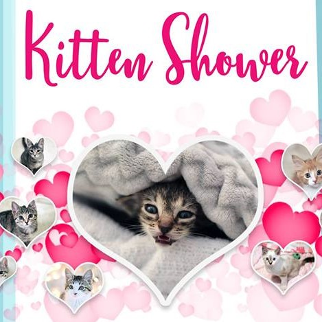 WCRAS Hosts Kitten Shower Saturday, March 16